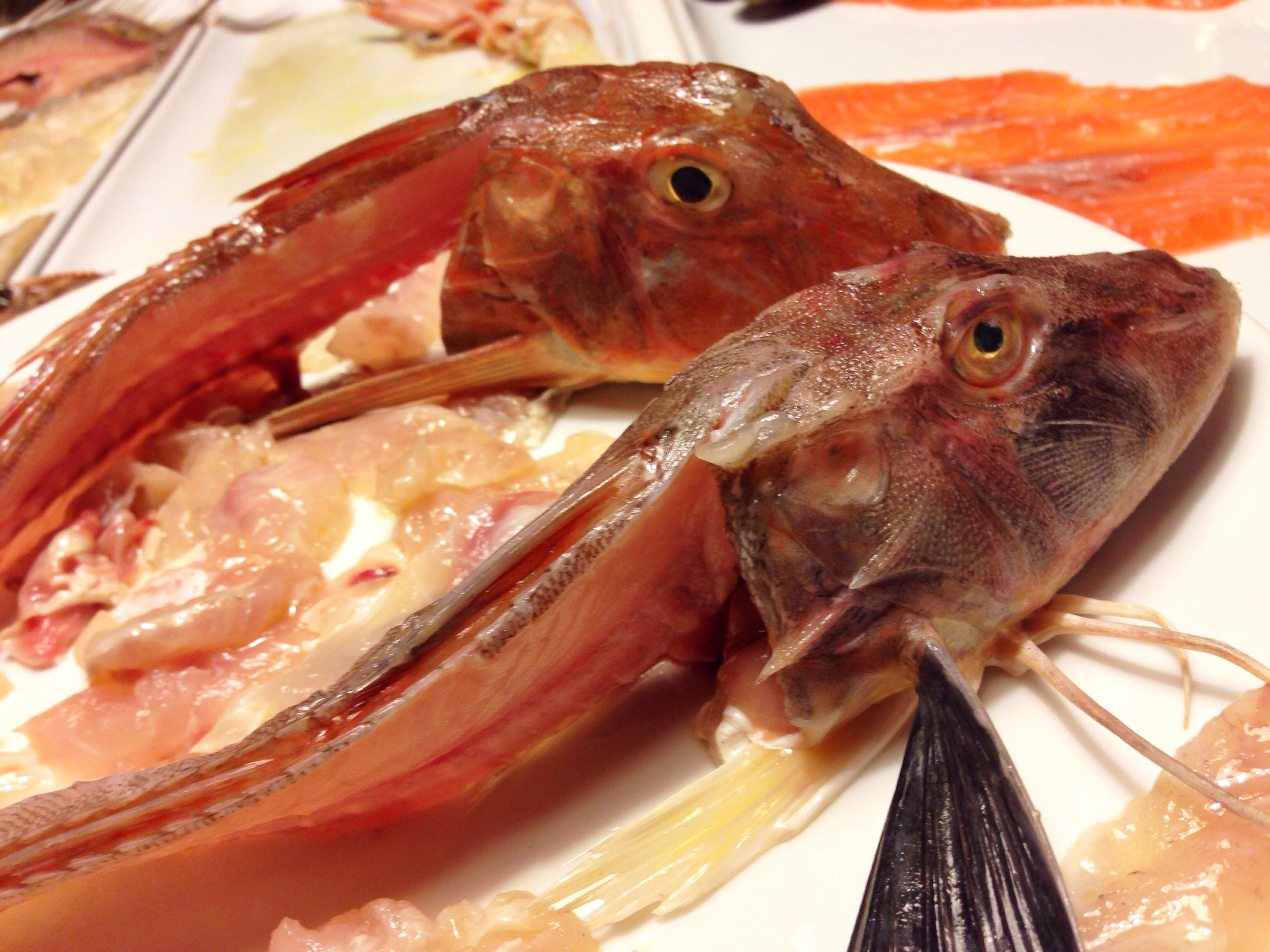 penacio pesce 3